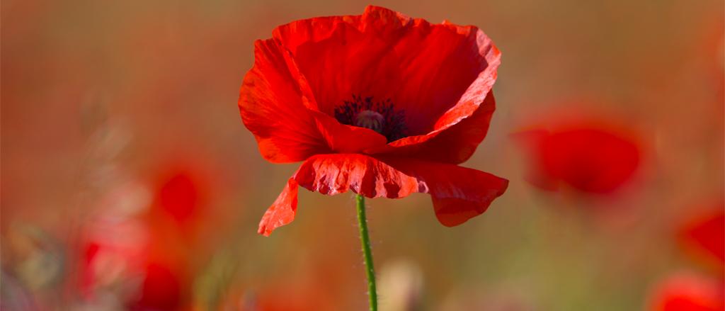 Remembrance Day Legislation 1