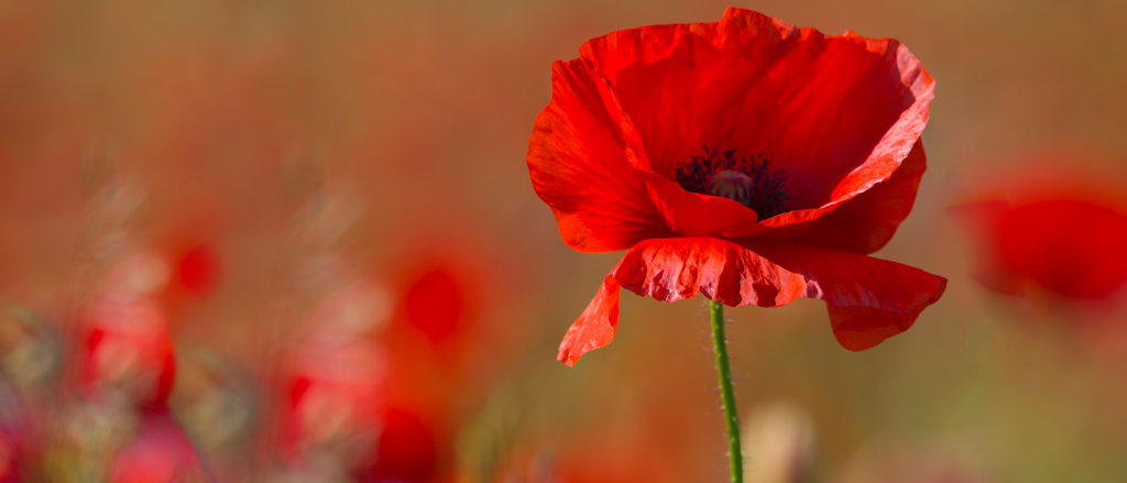 Remembrance Day Legislation 2